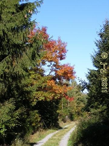Der Odenwald beginnt sich mit Herbstfarben zu schmücken!