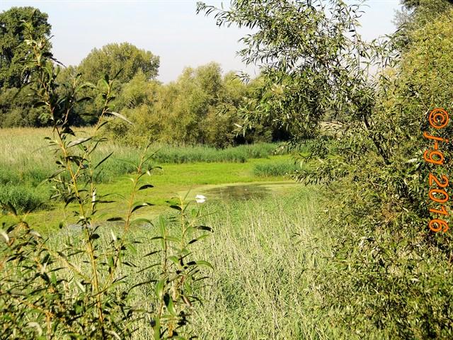Niedrigwasser im Naturschutzgebiet