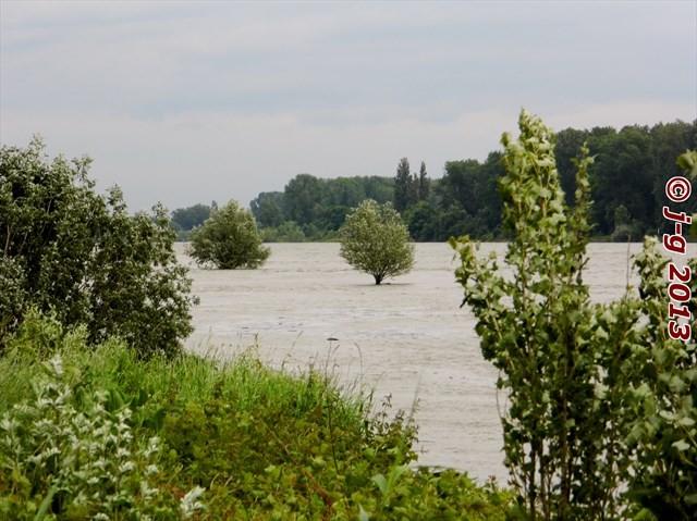 Rhein-Hochwasser
