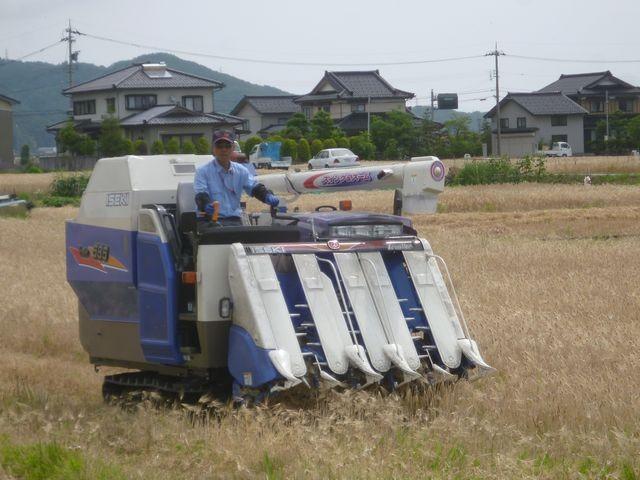 大麦の刈り取り