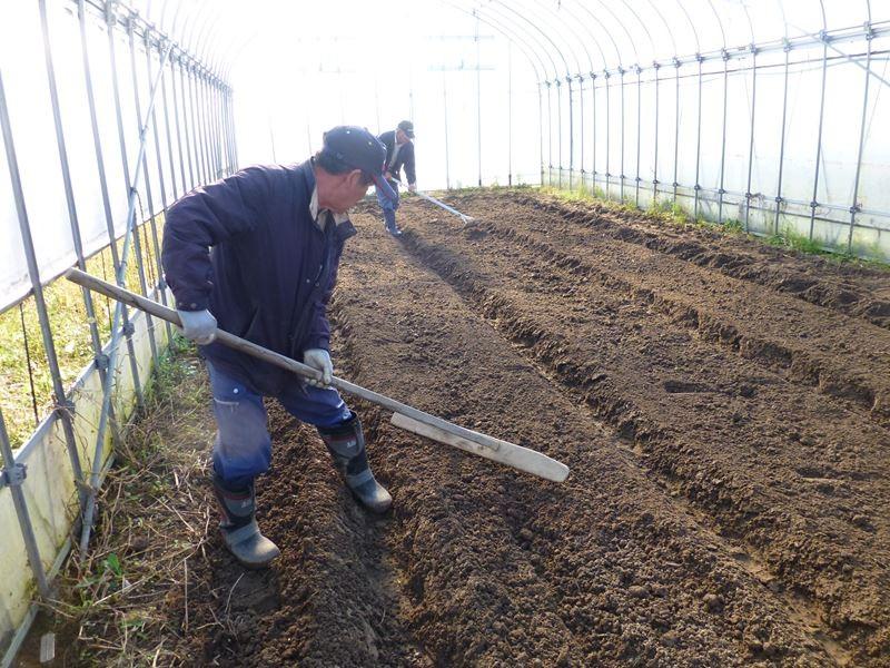 小松菜の土作り