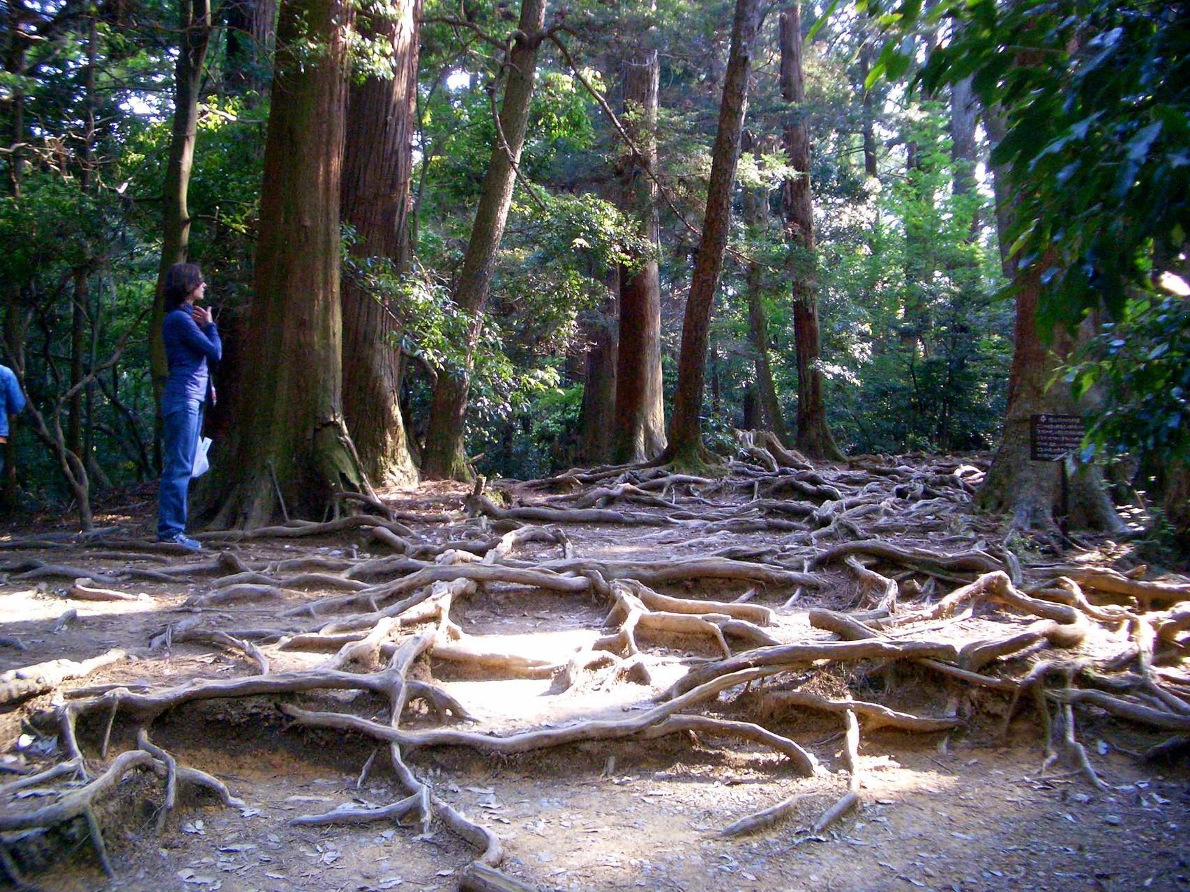 Kurama Mt.