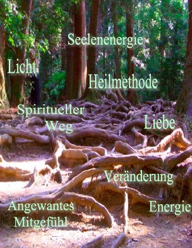 Baum Wurzeln Kurama Berg