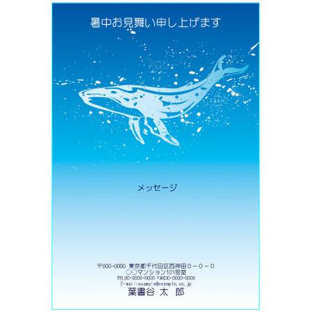 ふち無し 暑中見舞いテンプレート クジラ