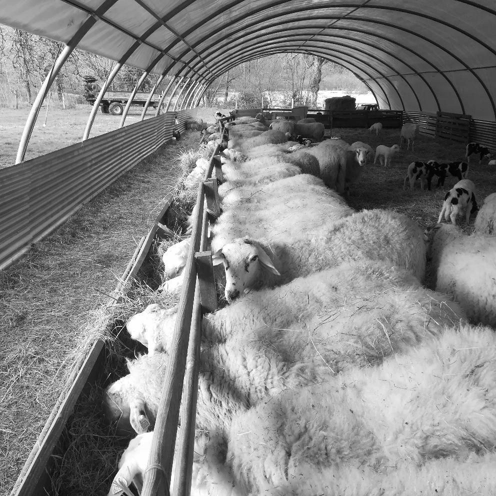 Une bergerie bien remplie