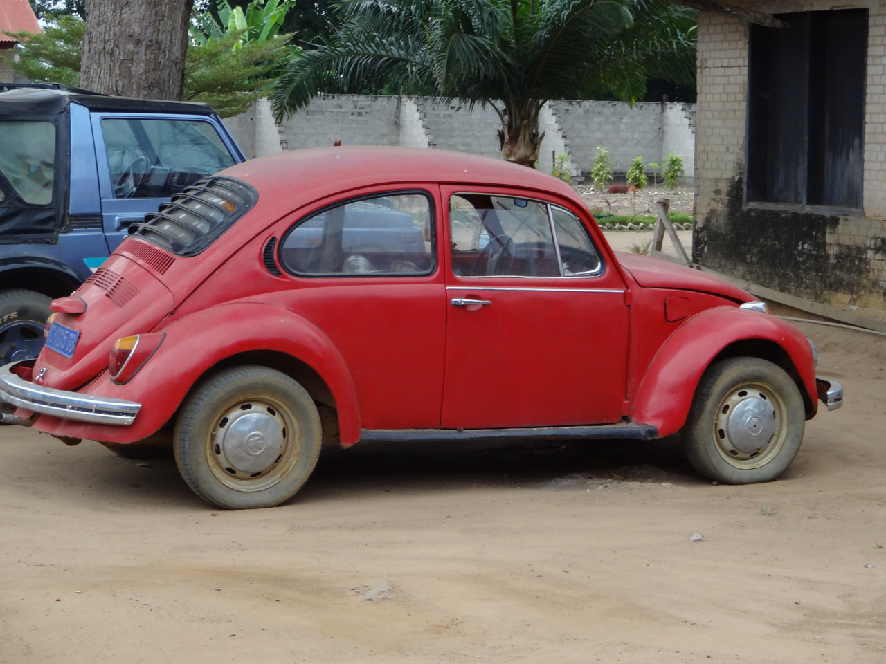 Ein Käfer im Kongo