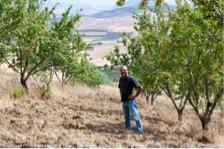 Piero kümmert sich um die Mandelbäume