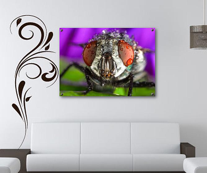 Makro Insekten Fotografie