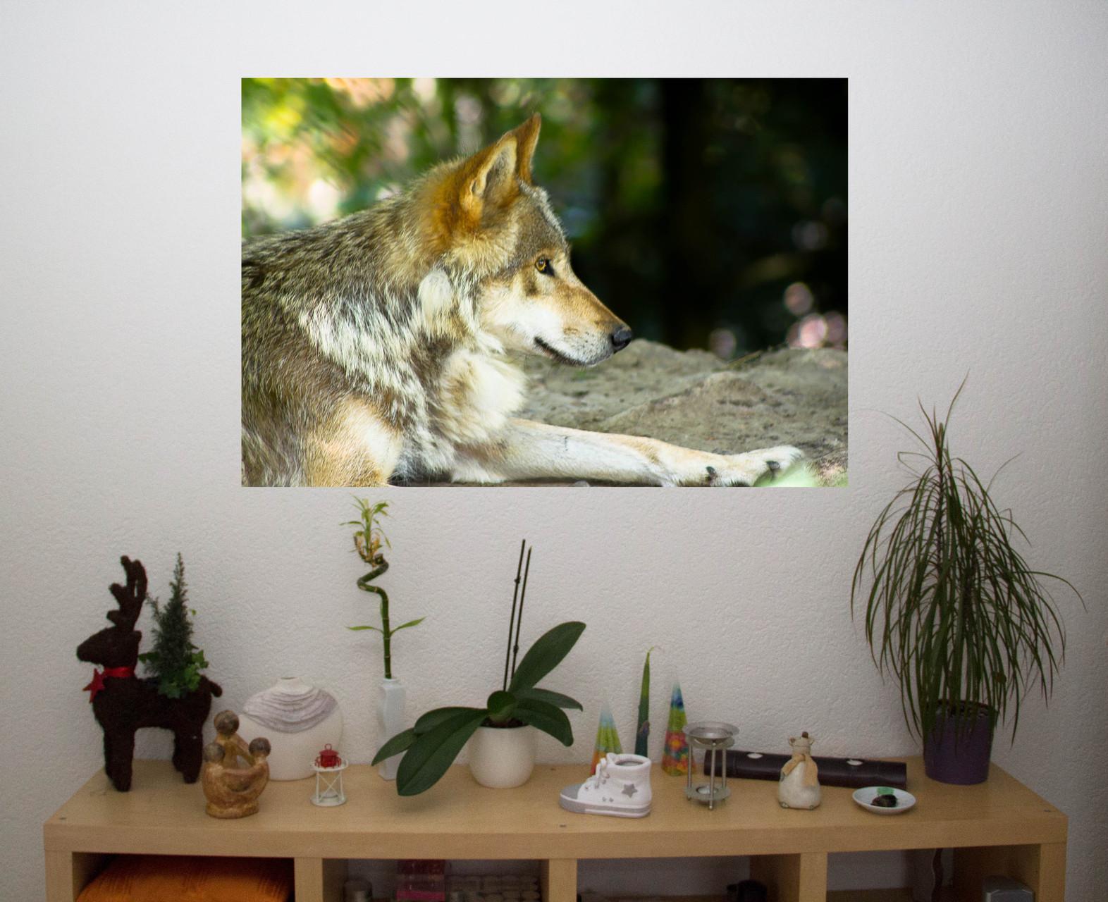 Tier Bilder