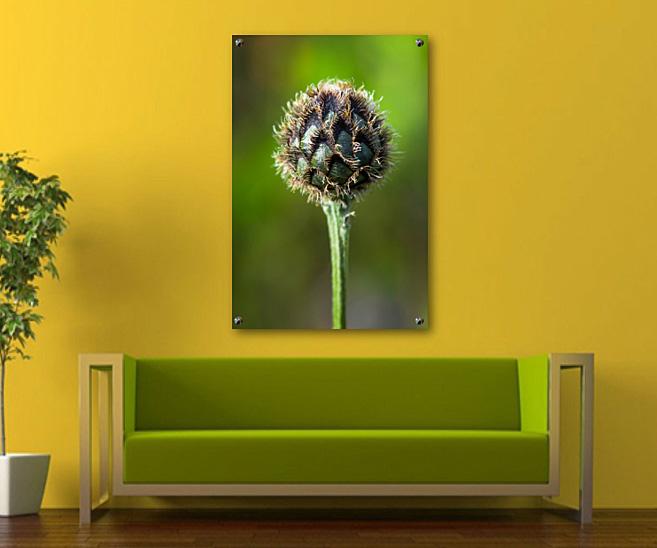 Blumen und Natur Fotos