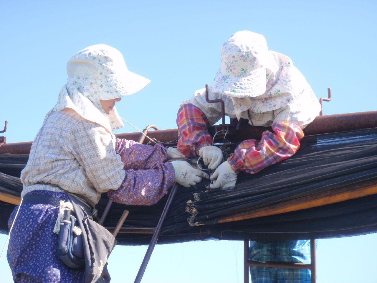 寒冷紗のワイヤー補修。