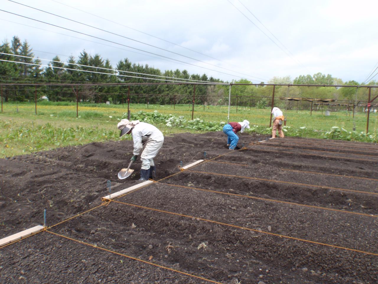 排水用の溝を掘る。