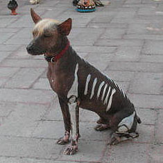 """Großer """"Day of the Dead""""-Xolo in Mexico"""