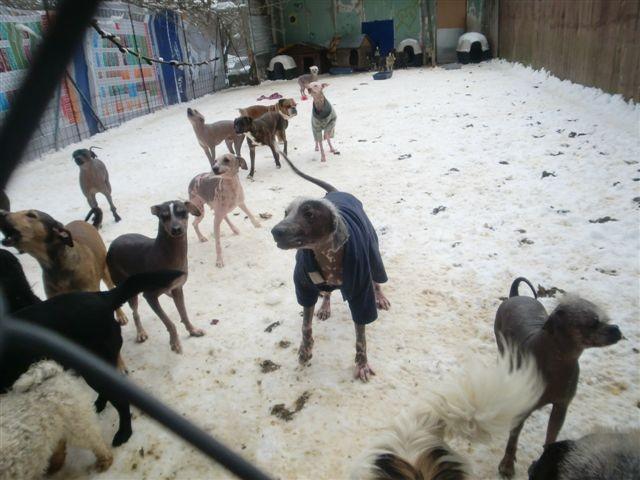 ....hier sind sie schon im Tierheim, kurz vor der Abreise.