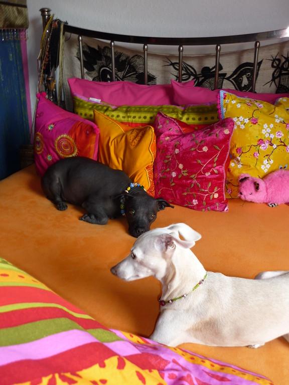 Lucy und Heintje nach der Modenschau....Siesta!