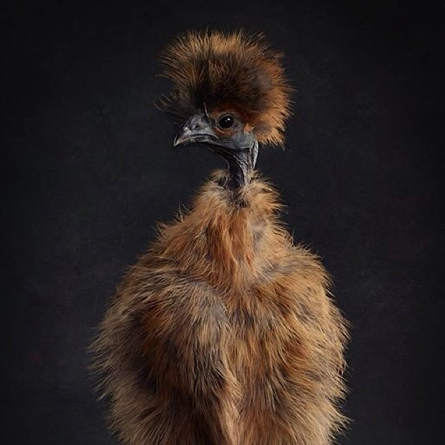 Gloria......The Craziest Show-Chick since Miss Josephine Baker! Foto von K.Dyba, wem sonst?