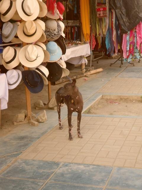...in Peru-ein Gruß von Sarah.