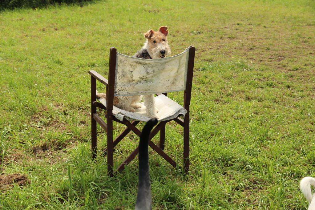 Gassiservice - Hundebetreuung - Dogwalking - Hundesitter - Dogsitter - Hundeausführservice - Dogsitting - Hundepension Hamburg^