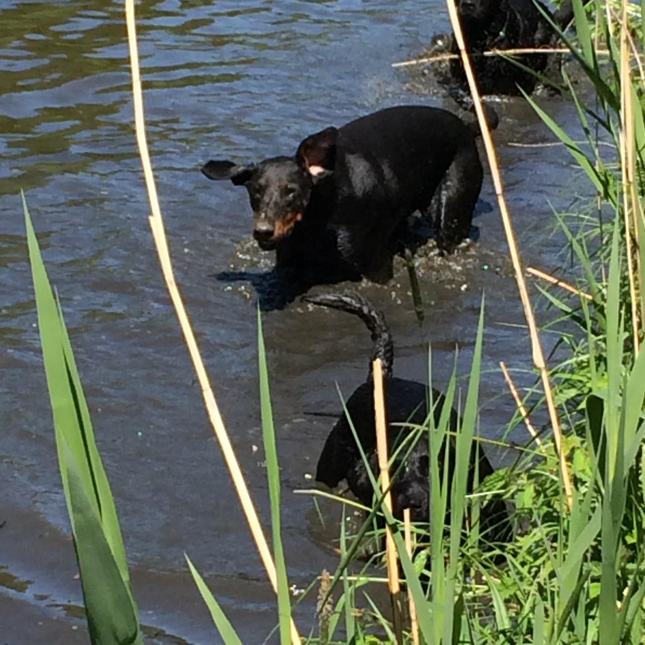 Hundeschule, Hundetraining Hamburg, Gassiservice Hamburg, Hundebetreuung Hamburg, Hundeschule Hamburg