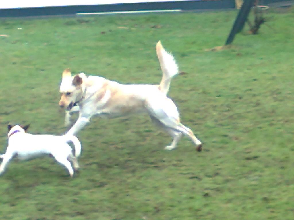 Hundebetreuung, Gassiservice, Dogwalking, Hundepension, Hundesitter, Dogsitter, Hundeausführsevice, Dogalker, Dogsitting Hamburg, PfötchenFarm