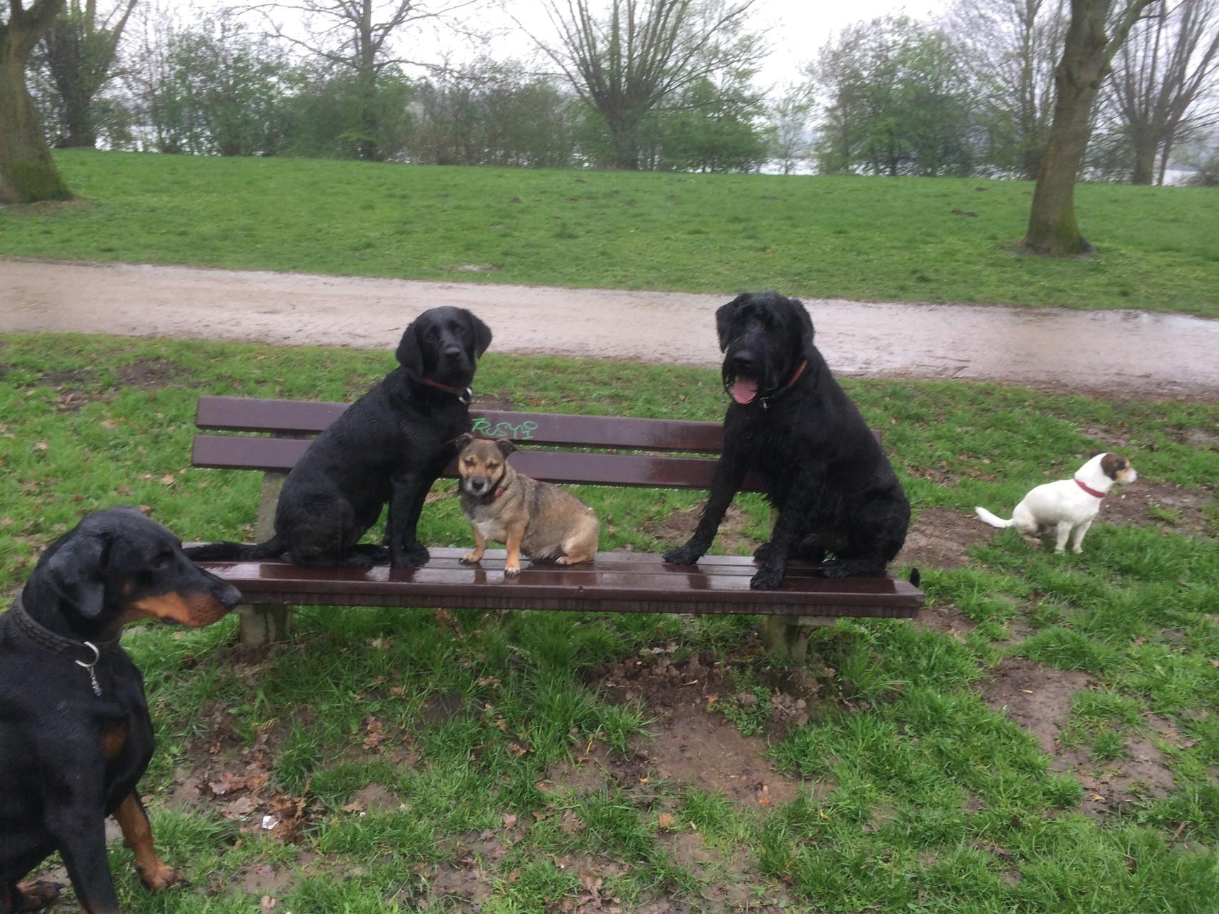 Hundeschule, Hundetraining, Gassiservice, Hundebetreuung, Hundeschule Hamburg
