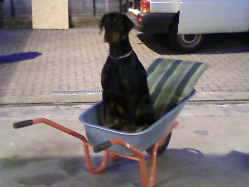 Gassiservice - Hundebetreuung - Dogwalking - Hundesitter - Dogsitter - Hundeausführservice - Dogsitting - Hundepension Hamburg