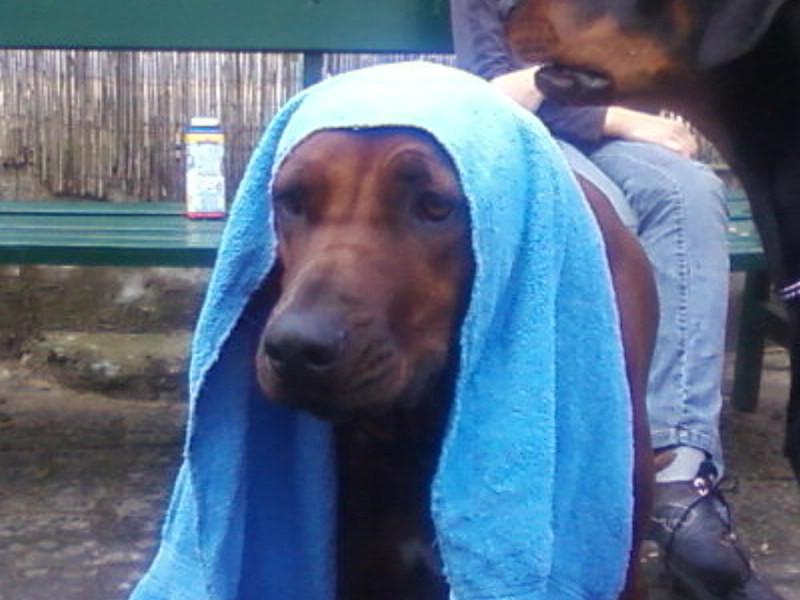 Gassiservice, Hundebetreuung, Dogsittier, Dogwalking, Hundepension, Hundesitter HamburgGassiservice, Hundebetreuung, Dogsittier, Dogwalking, Hundepension, Hundesitter Hamburg