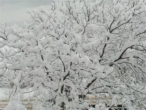 winter 11-12. . . schnee schnee schnee