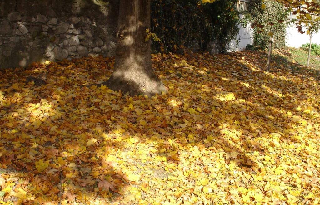 Baum-Laub-Schatten