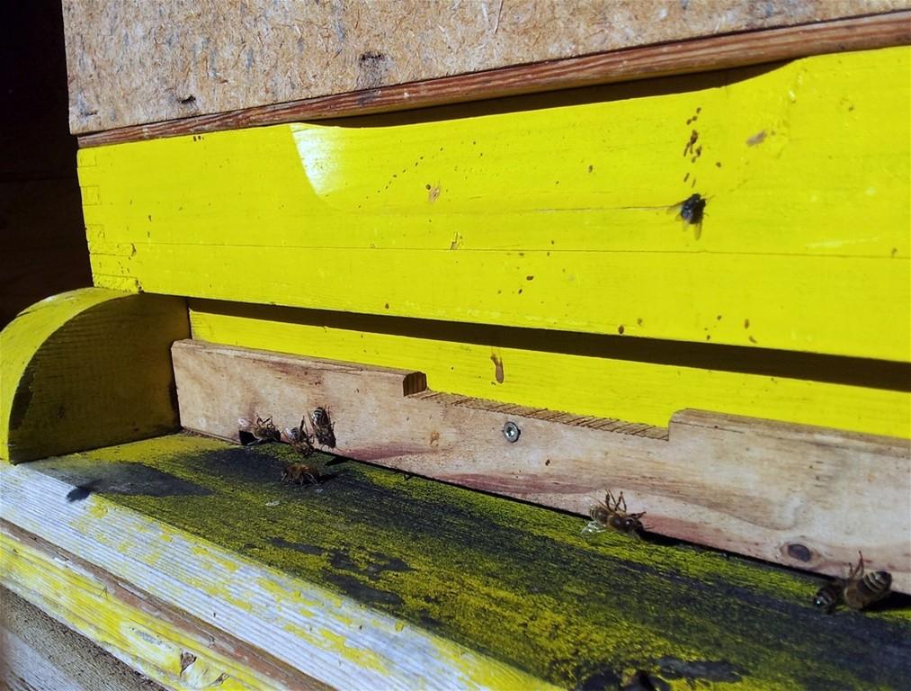 Bienenvolk im November