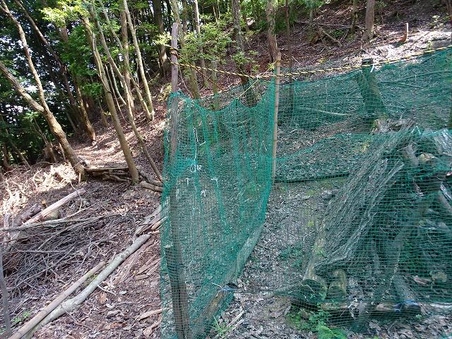 シイタケ栽培地のネットも背筋を伸ばしてよみがえりました。