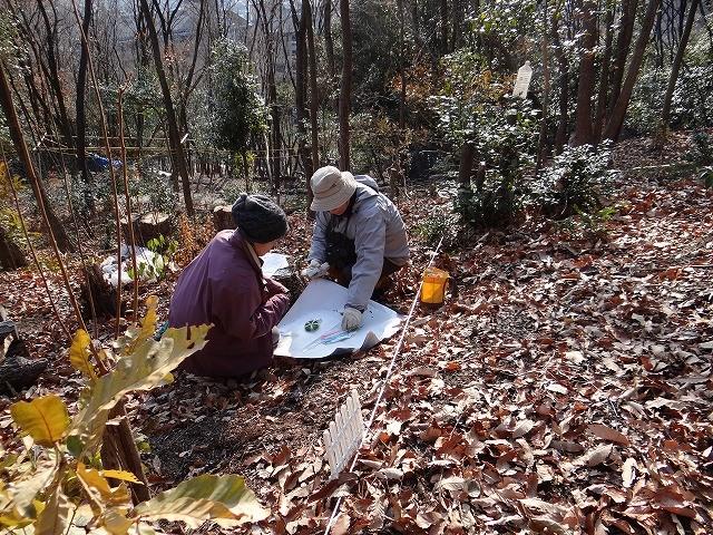 名札の取り付け、葉が落ちたり、枯れて判定が難しい中での作業