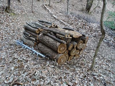 すべり台の近くにナラ枯れ被害木を伐倒積み上げている。
