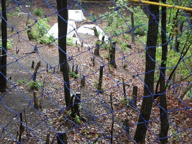 防鹿ネットの中萌芽