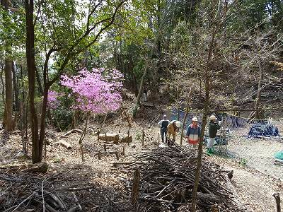 自然観察 桜谷コバノミツバツツジを鑑賞しながら