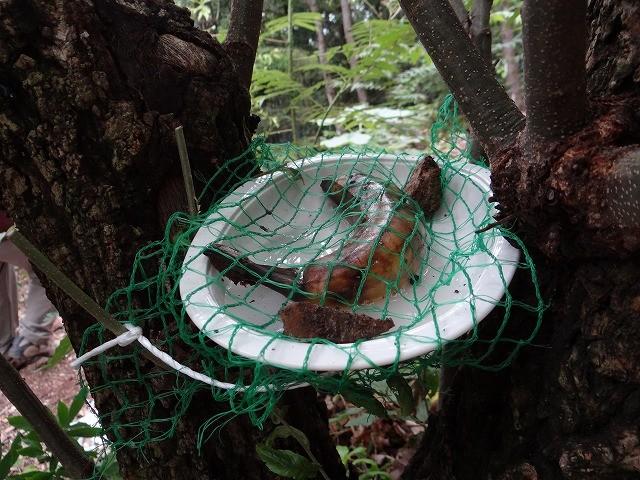 オオムラサキの餌場作りました。