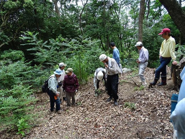 小規模皆伐地の中の植生観察