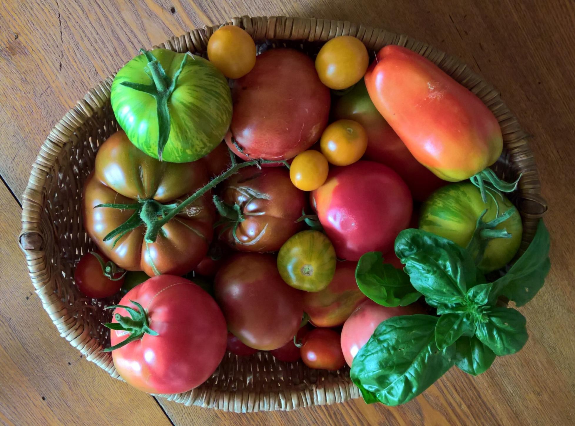 Reiche und bunte Tomatenernte