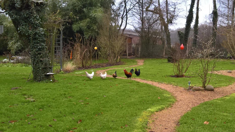 Ein erster gemeinsamer Entscheid: die Hühner dürfen raus aus ihrem Gehege uns sich frei im Garten bewegen