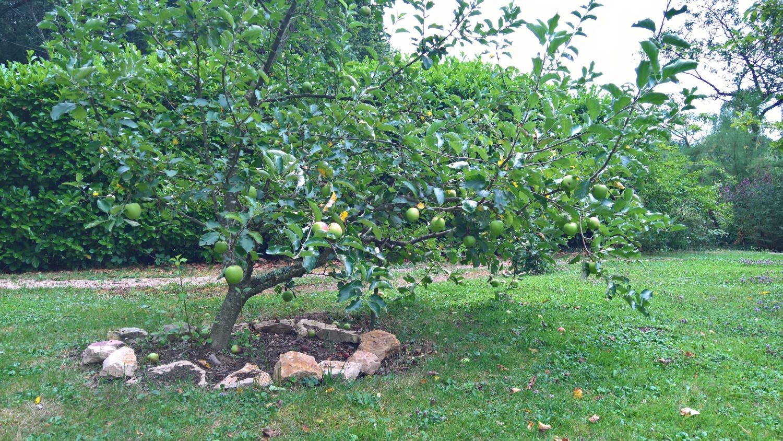 Der Apfelbaum trägt schön
