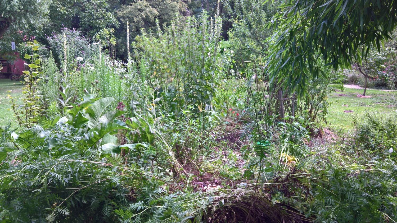 Die Permakultur wächst wild und ungehemmt