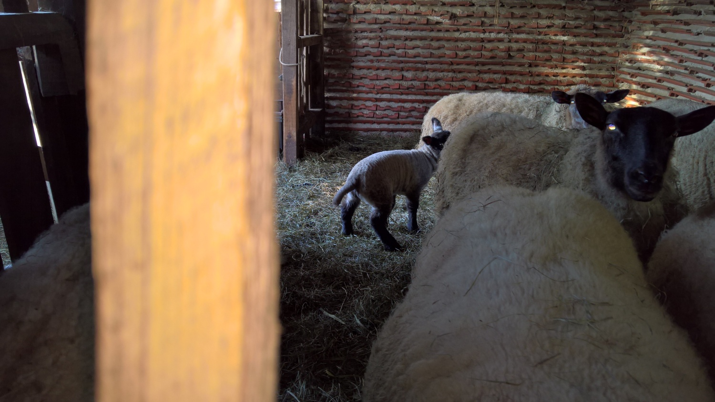 Besuch bei Georg & Gérald mit ihren Schafen