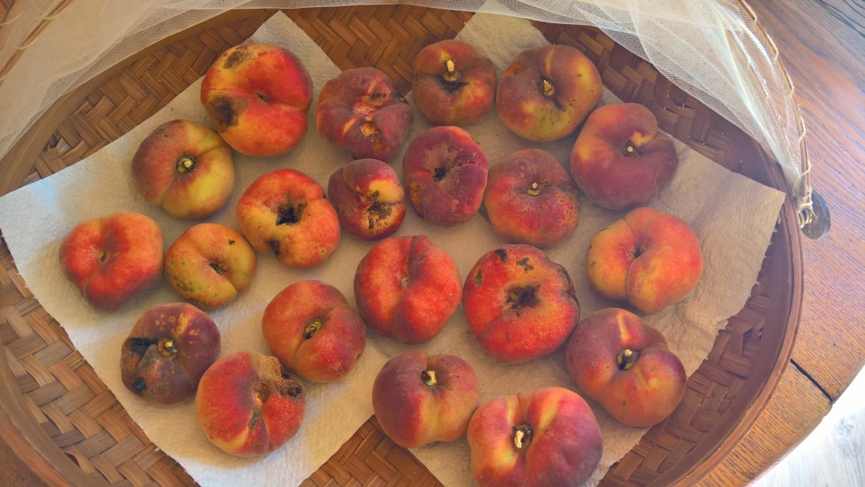spärliche Pfirsichernte