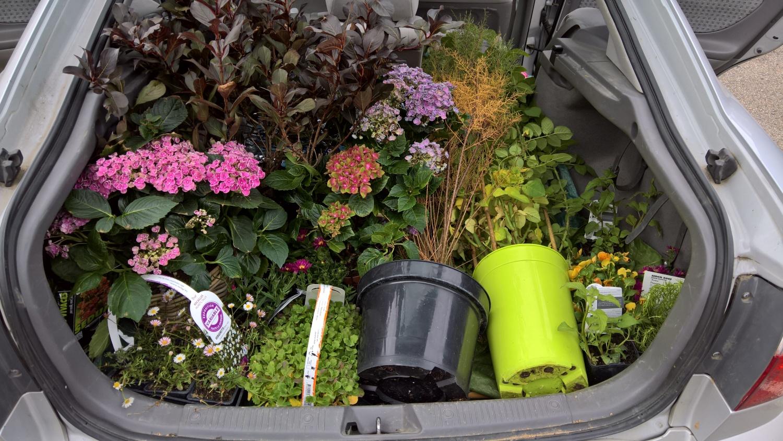 Ein Auto voller Pflanzen