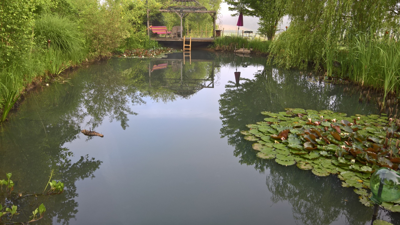 Der Schwimmteichbereich