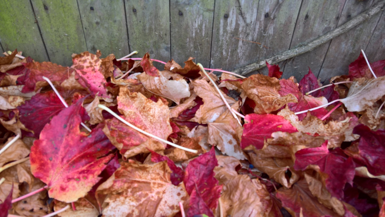 Gefallene Blätter