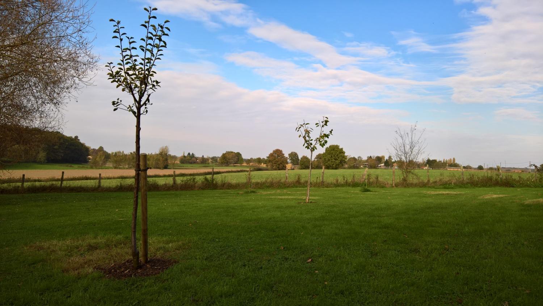 """Zwei neue Obstbäume im """"Schafgehege"""": eine Kirsche und ein Mirabellenbaum"""