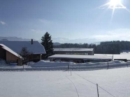 Winterlandschaft für Pferde