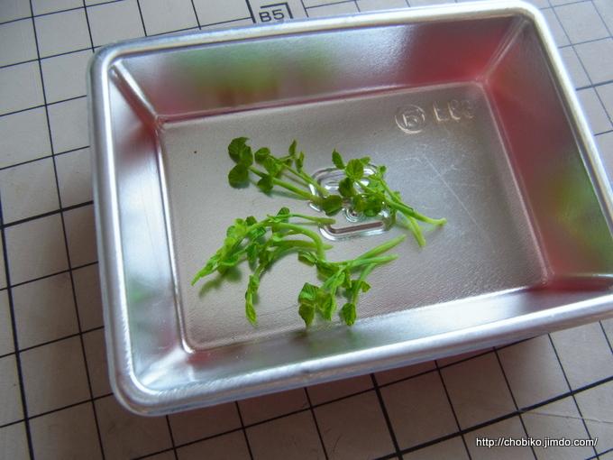クレソンの作り方(植物系)