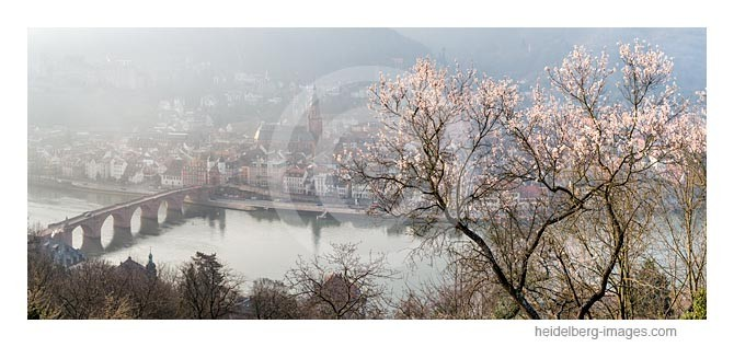 Archiv-Nr. hc2015117 / Heidelberg, Frühlingserwachen über der Altstadt